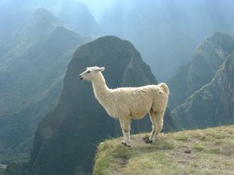 Lamini - Llama