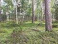 Landschap in Nationaal Park Sallandse Heuvelrug (4).jpg