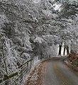 Lane past Shaw Wood - geograph.org.uk - 1113676.jpg