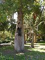 Le jardin botanique - panoramio - youssef alam (1).jpg
