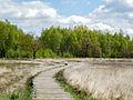 Lehrpfad auf Holzbohlen, Großes Torfmoor, Hille.jpg