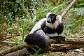 Lemur (25990482047).jpg
