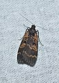 Lepidoptera (37019286661).jpg