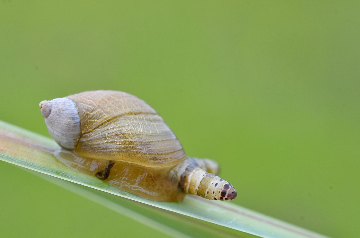 Forskare forandrar myrors beteende