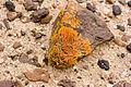 Lichen (3690936143).jpg