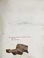 Lichenes Helvetici IX X 1833 030.jpg