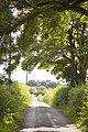 Light through the trees at Bryantang Brae - geograph.org.uk - 1402229.jpg