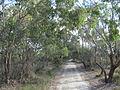 Lightning Swamp trails 1.jpg