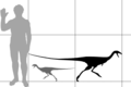 Limusaurus size.png
