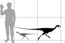 Diagram comparing the size of Limusaurus to an human