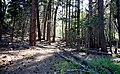 Lincoln NF trail 3.jpg