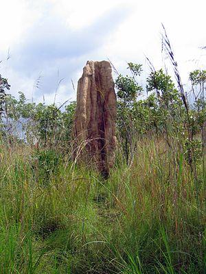 Mound-building termites - A mound in Australia