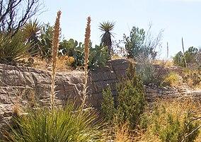 Living desert zoo 2.jpg