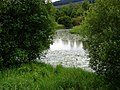 Loch Ken Marshes - geograph.org.uk - 963895.jpg