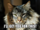 Lolcat - I'll get you for this.png
