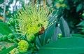 Macro bee in cool nature.jpg