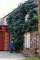 Magnolia delavayi.jpg