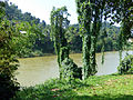 Mahaweli-Jardin botanique de Kandy (1).jpg