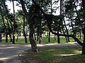 Maiko Pine Grove 5.JPG