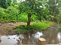Majhgawan, Madhya Pradesh 485661, India - panoramio.jpg