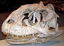 Majungasaurus crenatissimus (2).jpg
