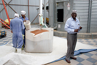 Pearl millet - This flour mill in Tanzania mills pearl millet.