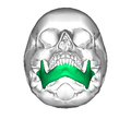Mandible inferior2.png