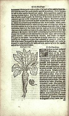 Mandrake - William Turner's Herbal.jpg