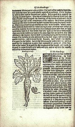 Mandrake - William Turner's Herbal.jpg