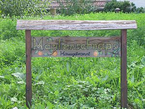Marillenschnaps - A sign advertising home-made Marillenschnaps in Austria