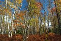 Marion Brooks Natural Area (4) (8064497617).jpg