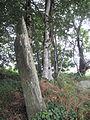 Menhir-Guernangoue4.jpg