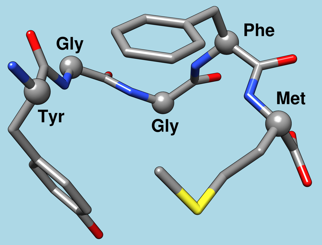 Met-enkephalin 1plx model 1.png