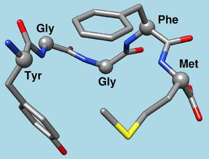 Enkephalin - Image: Met enkephalin 1plx model 1