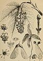 Meyers Konversations-Lexikon - eine Encyklopädie des allgemeinen Wissens (1890) (14592460198).jpg