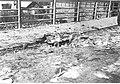 Miejsce rzekomego wybuchu iperytu na moście w Jaśle (2-90).jpg