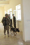 Military working dog helps protect service members 131001-Z-MH103-003.jpg