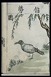 Ming herbal (painting); Shrike Wellcome L0039452.jpg