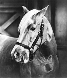Description de l'image  Mister Ed.JPG.