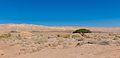Mitzpe Ramon Lone tree in Mitzpe Ramon Crater (15456353585).jpg