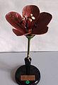 Modell von Geranium pratense (Wiesen-Storchschnabel) -Osterloh Nr. 121-122-.jpg