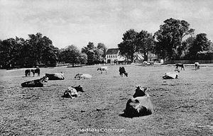 Monken Hadley Common - Grazing on the Common in the early 1900s. Hurst Cottage in the background.