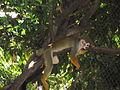 Monkey resting.JPG