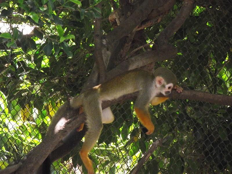 File:Monkey resting.JPG