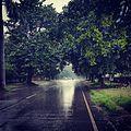 Monsoons.jpg