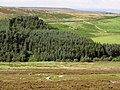 Moorland, plantation and pastures near Heatheryburn Farm - geograph.org.uk - 508390.jpg