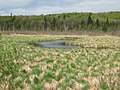 Moraine Creek - panoramio.jpg