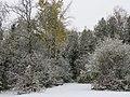 Morning snow (45155486674).jpg