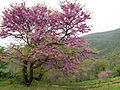 Mossano Valle Molini 11.jpg