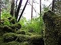 Mossy Stump - panoramio.jpg